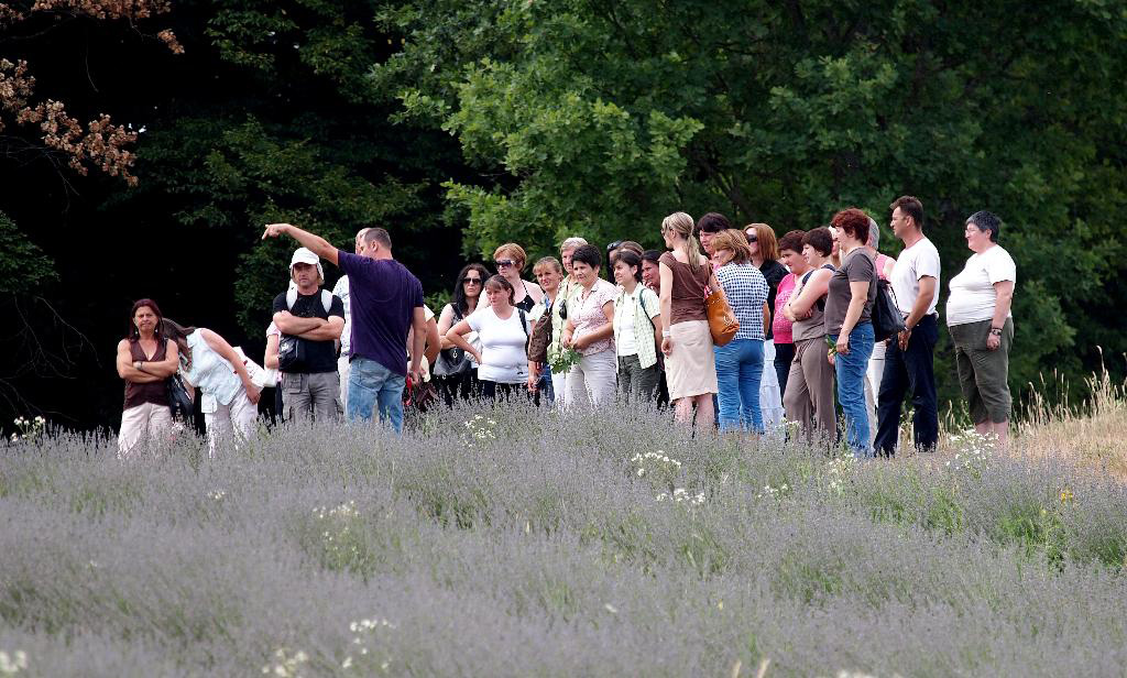 Došlović lavender field with guests